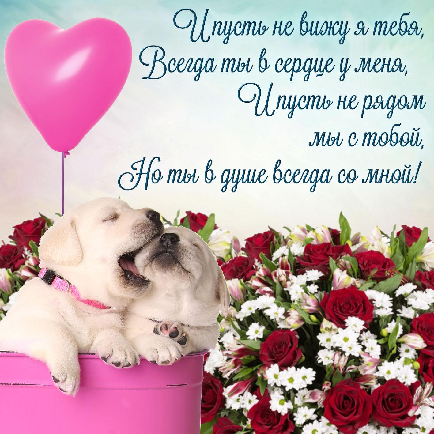 Открытка люблю - милые собачки с шариком на фоне цветов