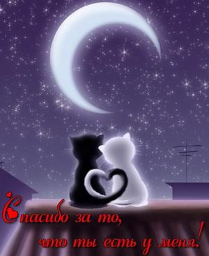 Два котика на крыше под луной