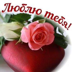 Красивая роза для любимой