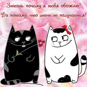 Влюбленные котики на красивом фоне