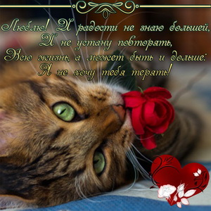 Красивая кошечка с красной розой