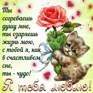 Котёнок с розой и признание в любви