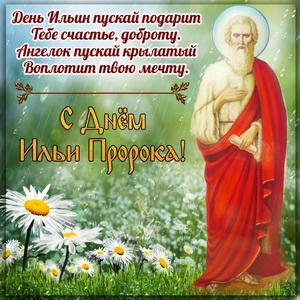 Открытка с ромашками на День Ильи Пророка