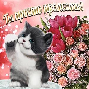 Картинка с котиком и цветами - ты просто прелесть
