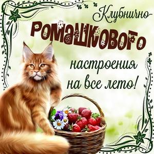 Рыжий котик с добрым пожеланием на всё лето