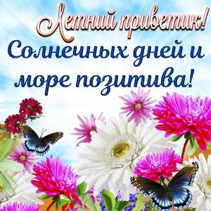 Картинка с бабочками, цветами и летним приветиком