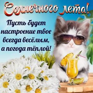 Картинка с котиком и пожеланием солнечного лета