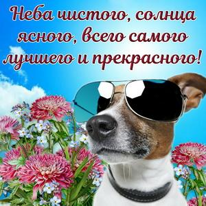 Картинка с милым пожеланием и собачкой в очках