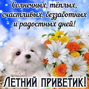 Милая собачка шлёт Вам летний приветик