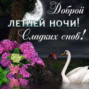 Открытка с лебедями и пожеланием доброй летней ночи