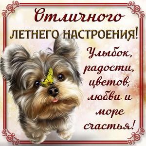 Милая собачка желает отличного летнего настроения