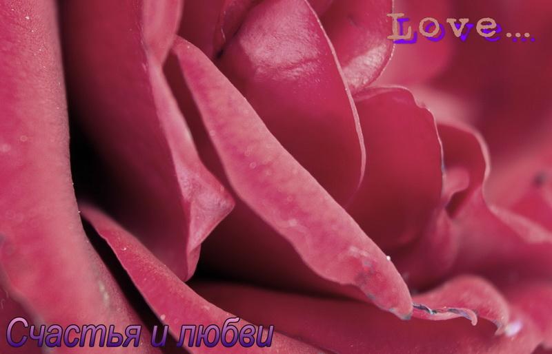 С днём святого валентина, роза, счастья и любви
