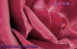 Открытка, роза, счастья и любви
