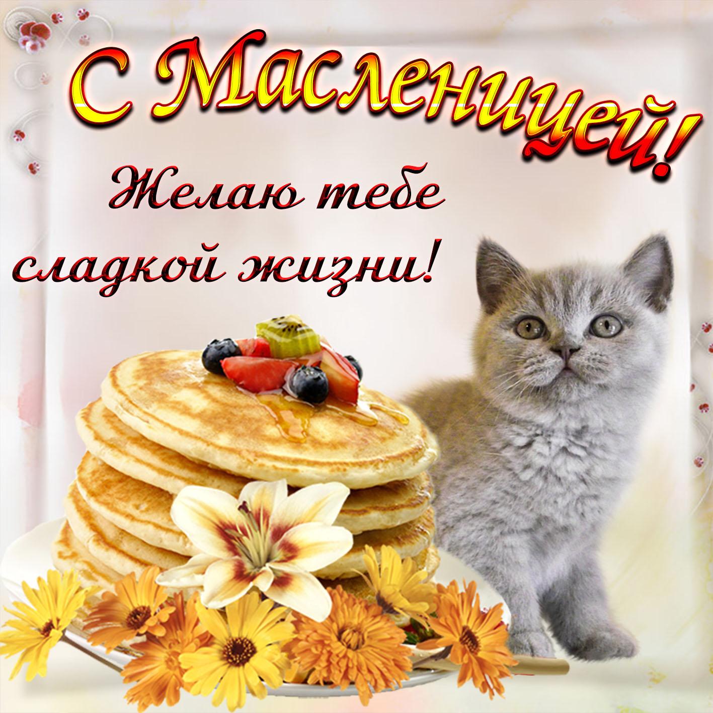 Открытка - милый котик поздравляет с Масленицей