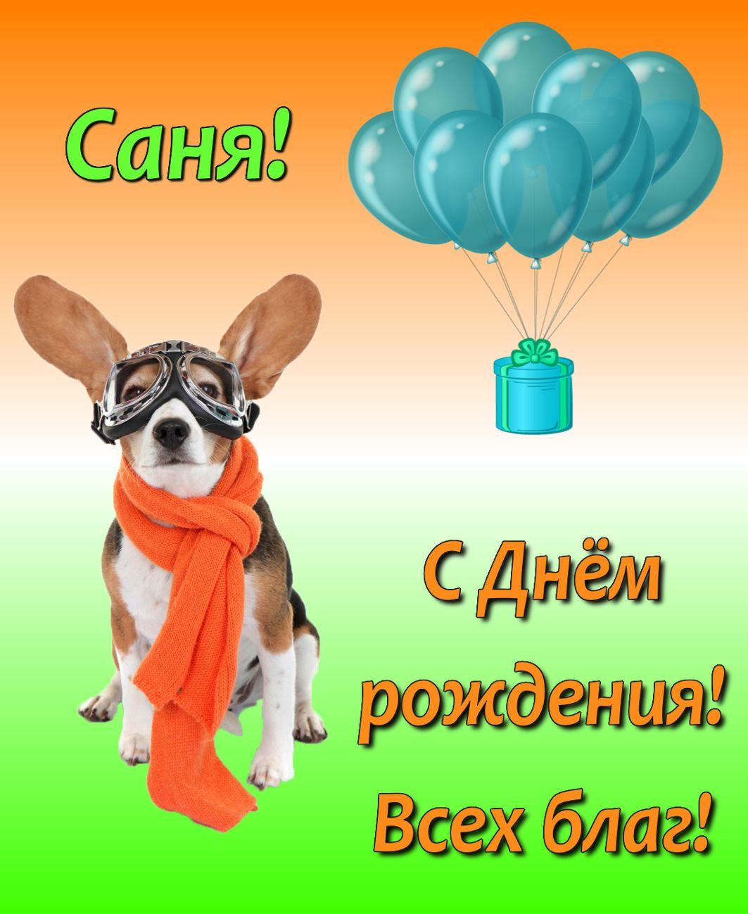 Открытка для Сани с собачкой в шарфике