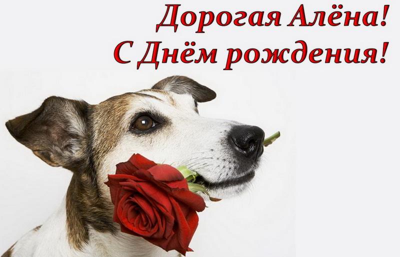 Открытка, собачка дарит розу