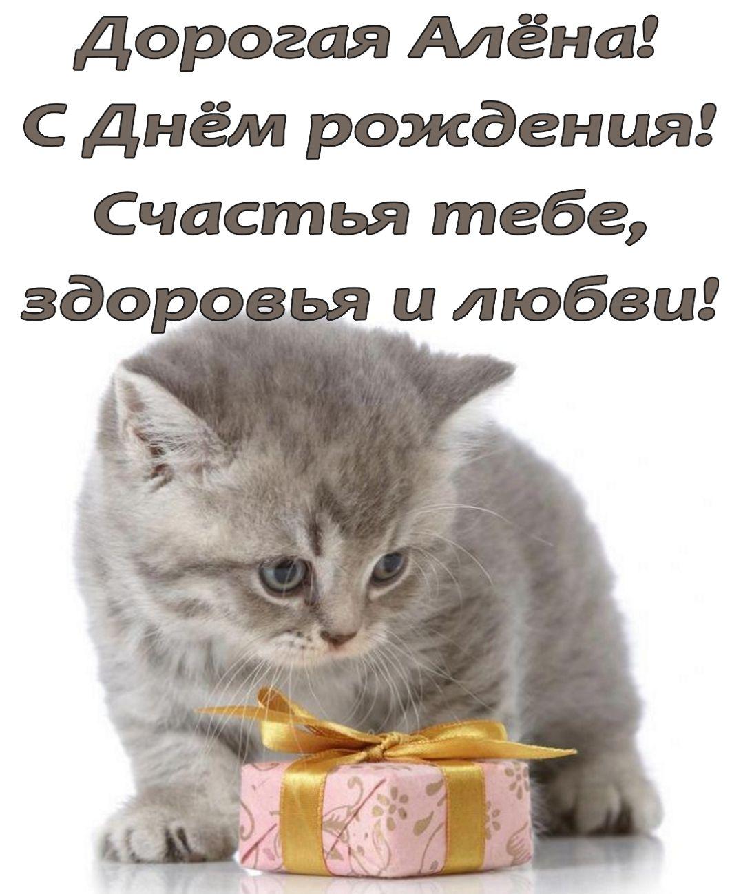 Открытка с красивым серым котенком