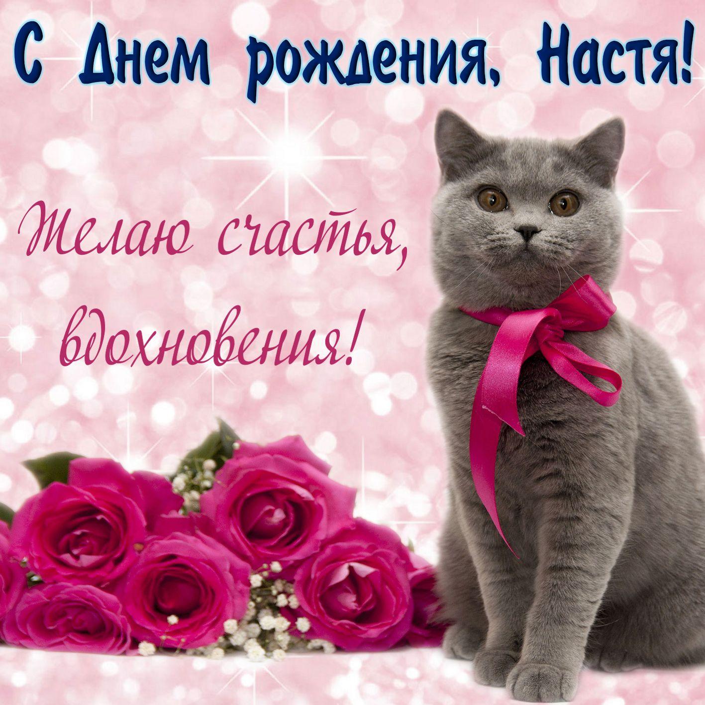 Открытка на день рождения Анастасии - милый котик с бантом на сверкающем фоне