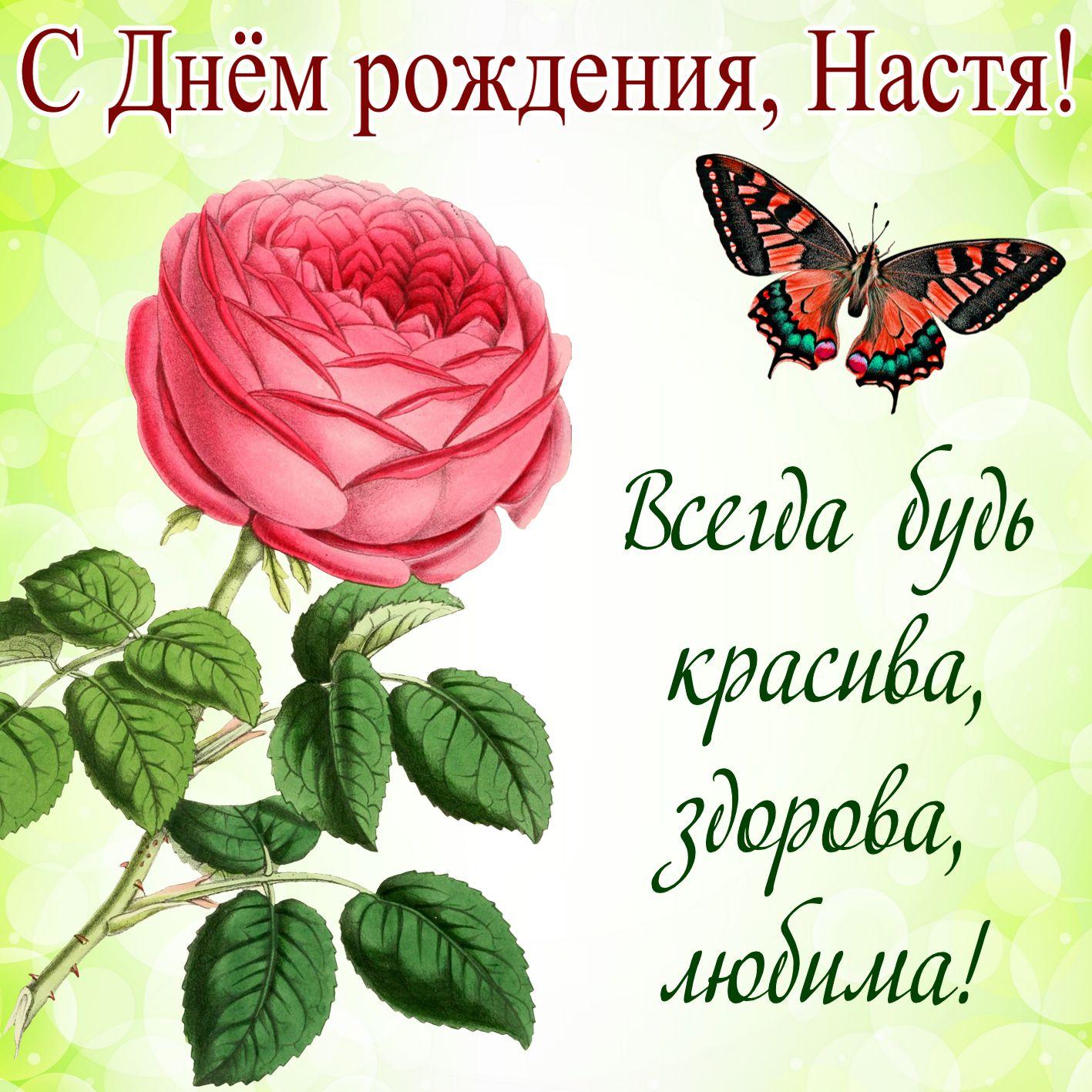 Открытка - роза и пожелание на День рождения Насте