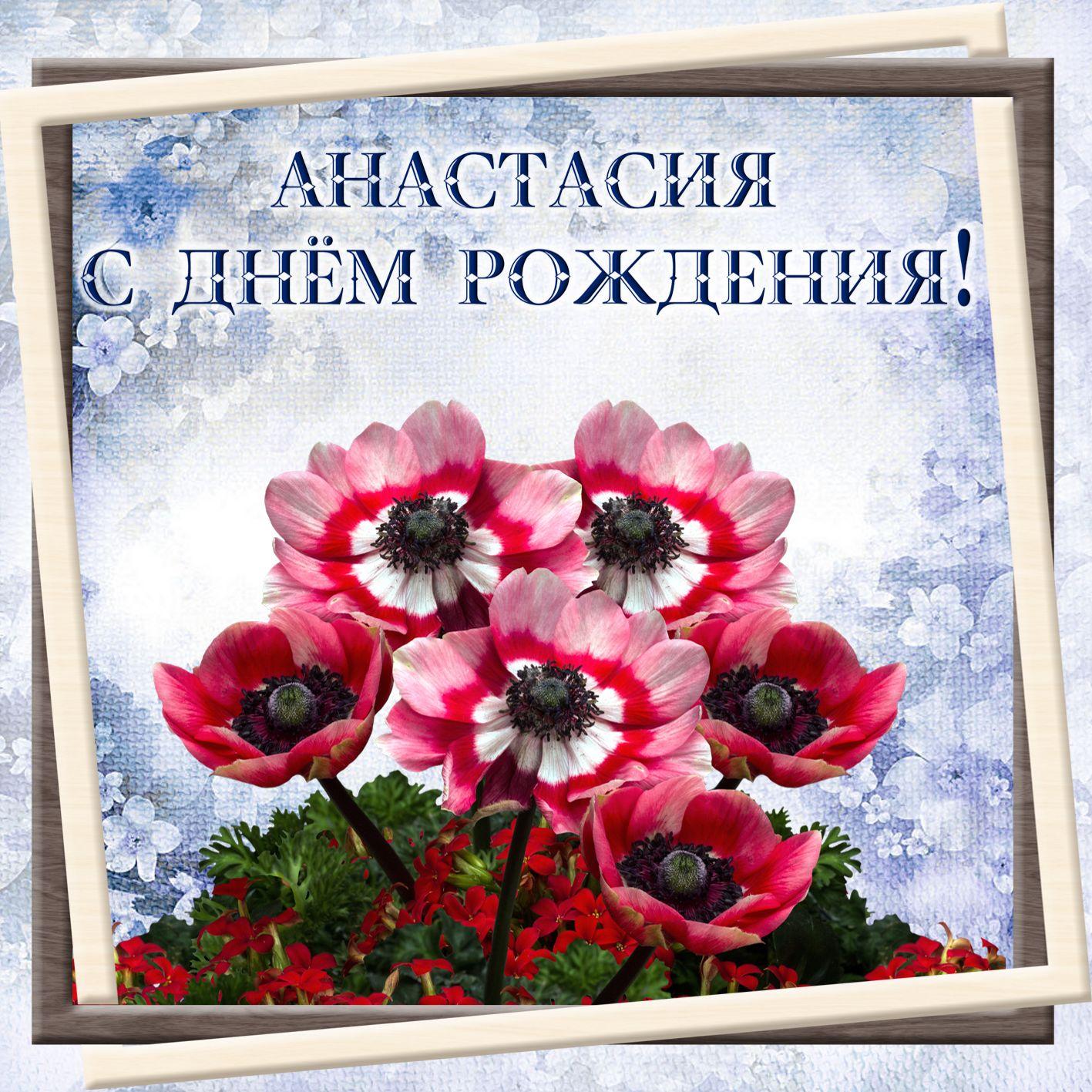 Открытка на день рождения - красивые цветы в рамке для Анастасии