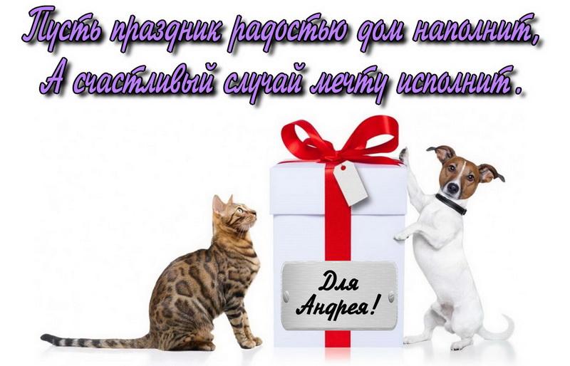 Кошка и собака с подарком для Андрея