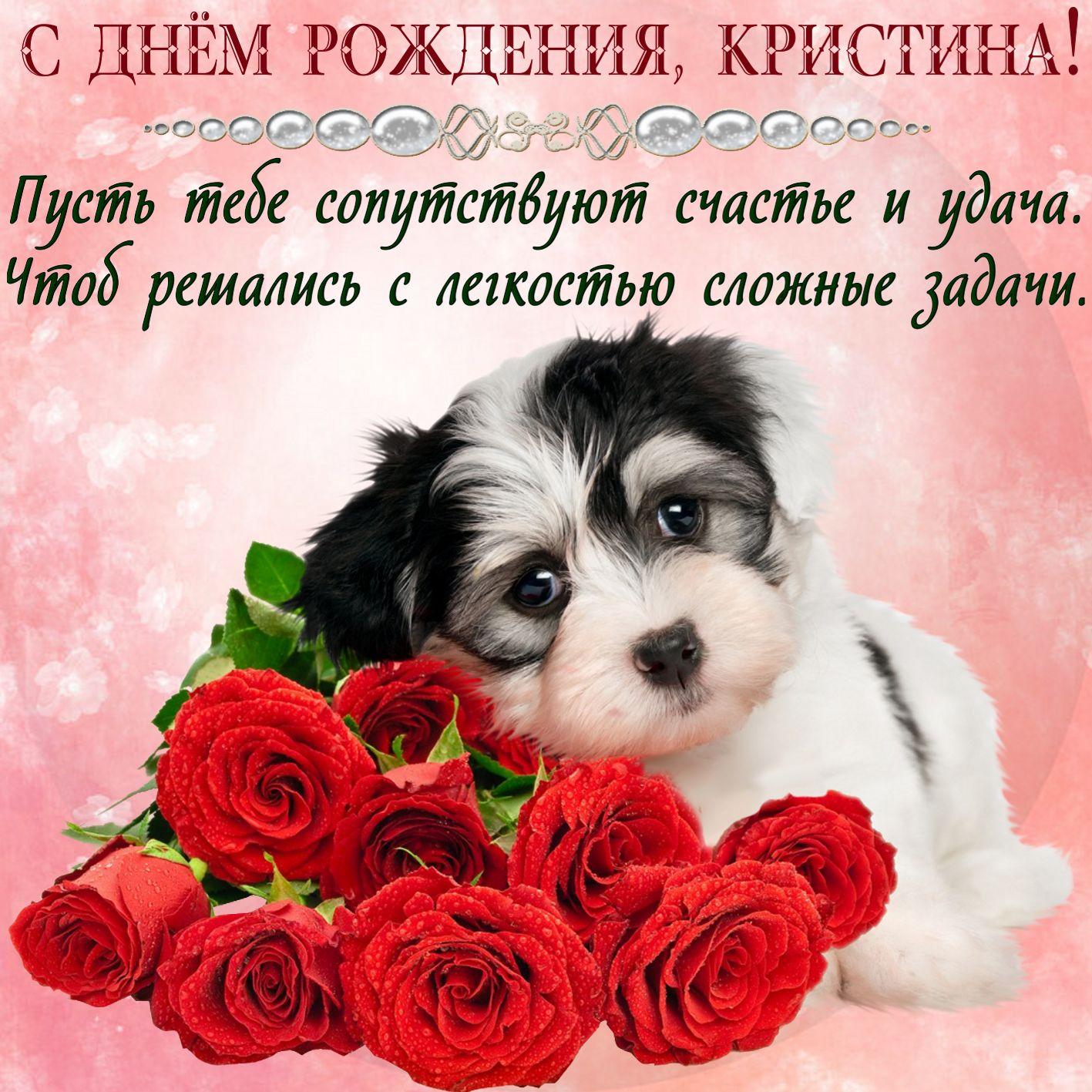 Открытка на День рождения - милая собачка с розами для Кристины