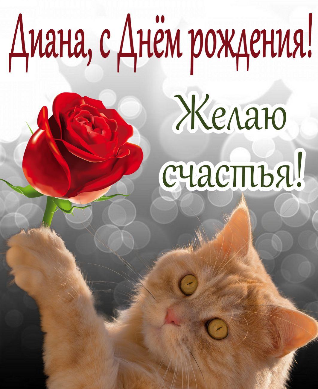 Открытка с Днем рождения Диане - красивый рыжий котик с красной розой