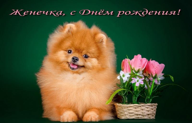 Открытка с пушистой собачкой и цветами