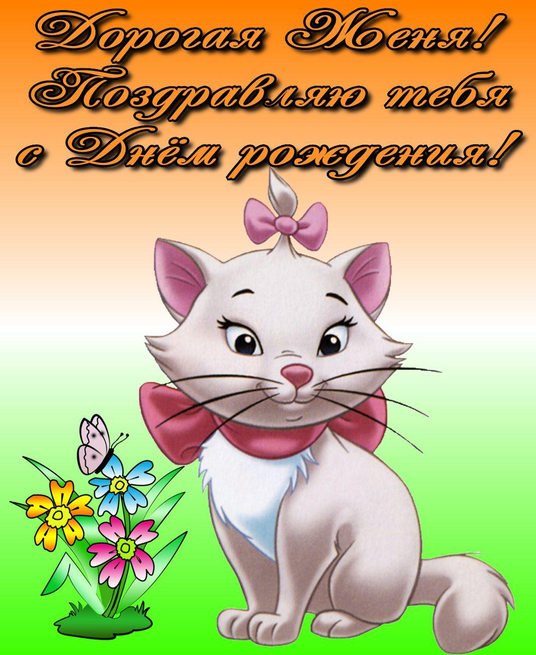 Поздравление с котиком для Жени