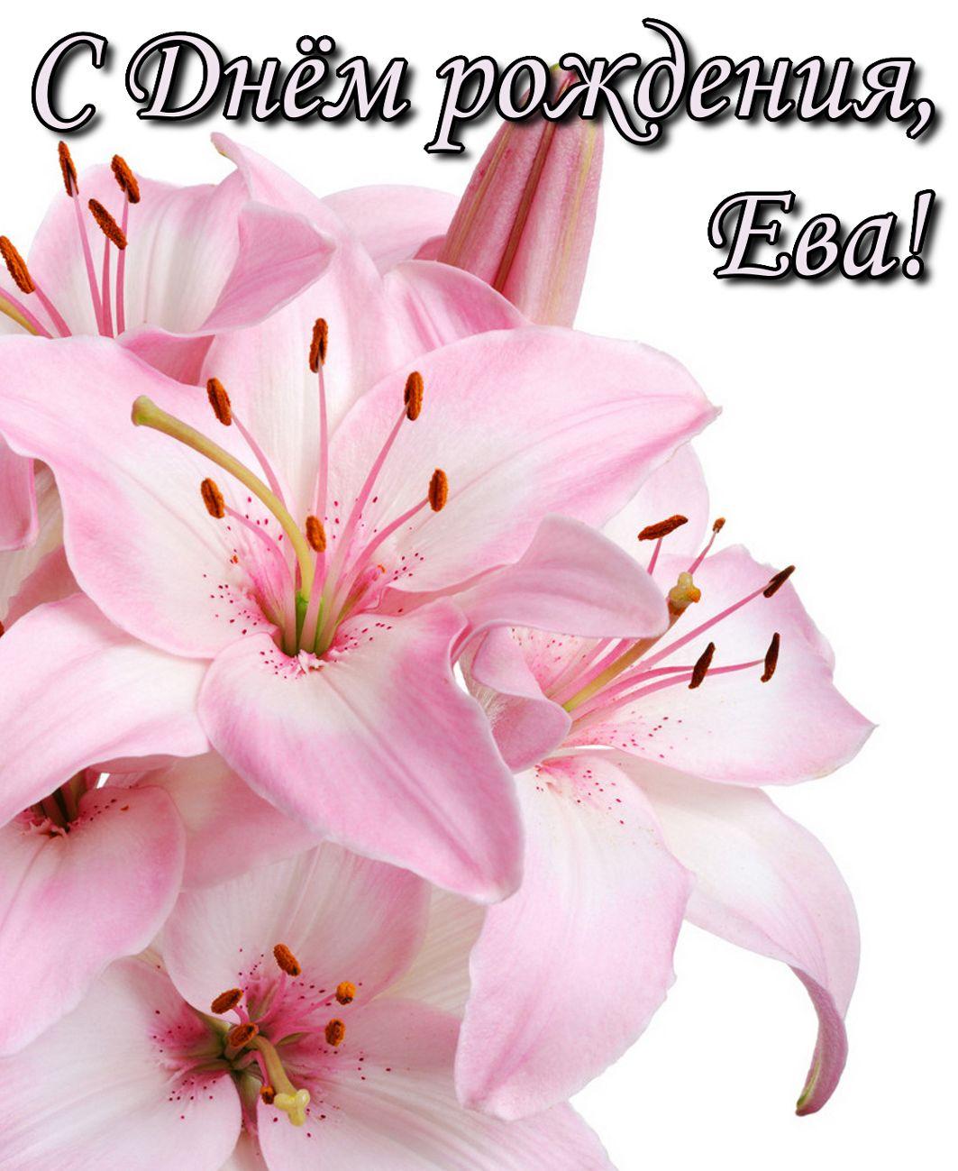 Большой розовый цветок на День рождения Еве