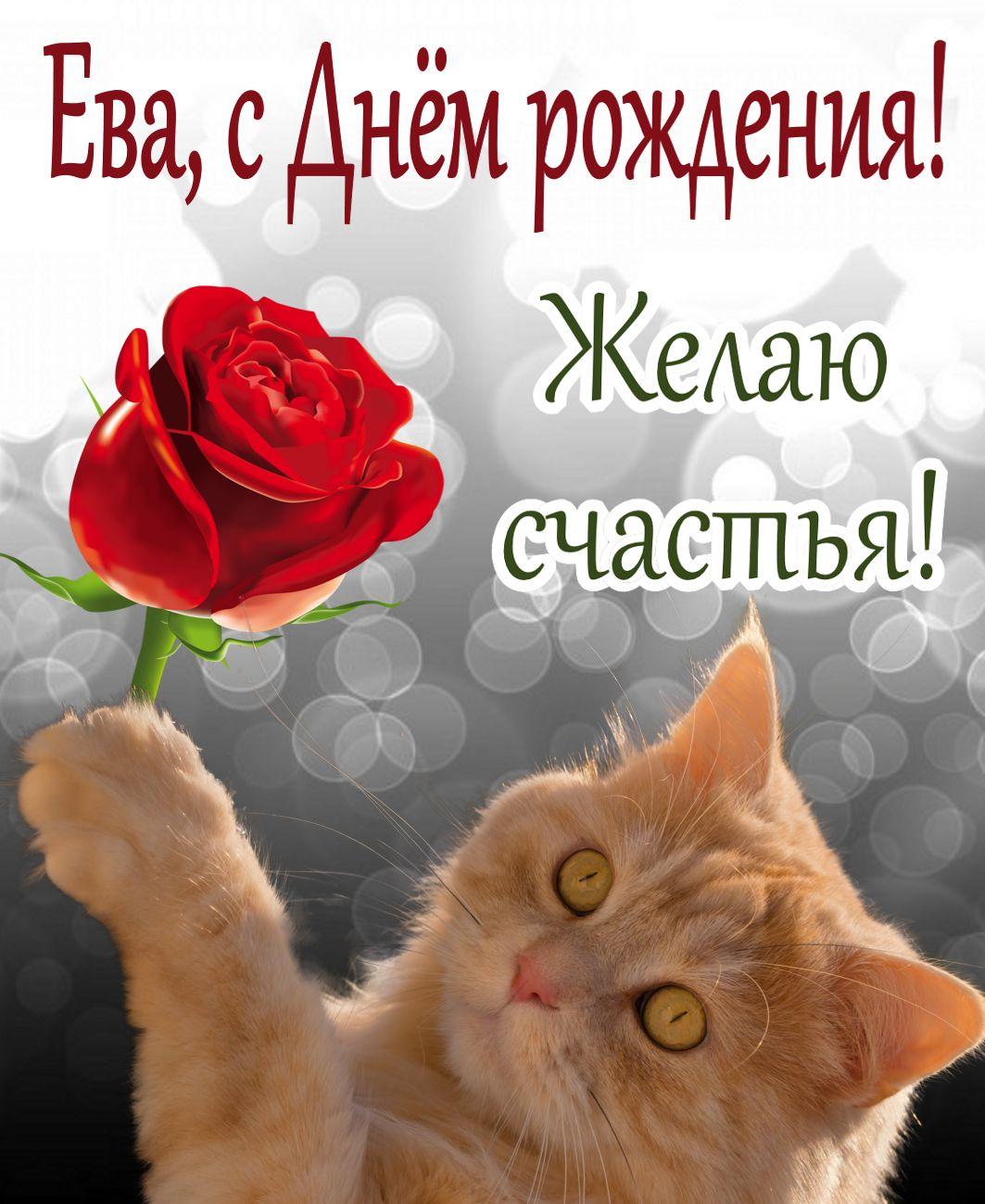 Открытка с Днем рождения Еве - рыжий котик с красной розой желает счастья
