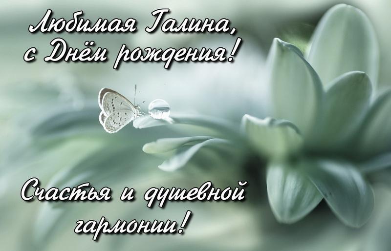 Открытка с бабочкой на белом цветке