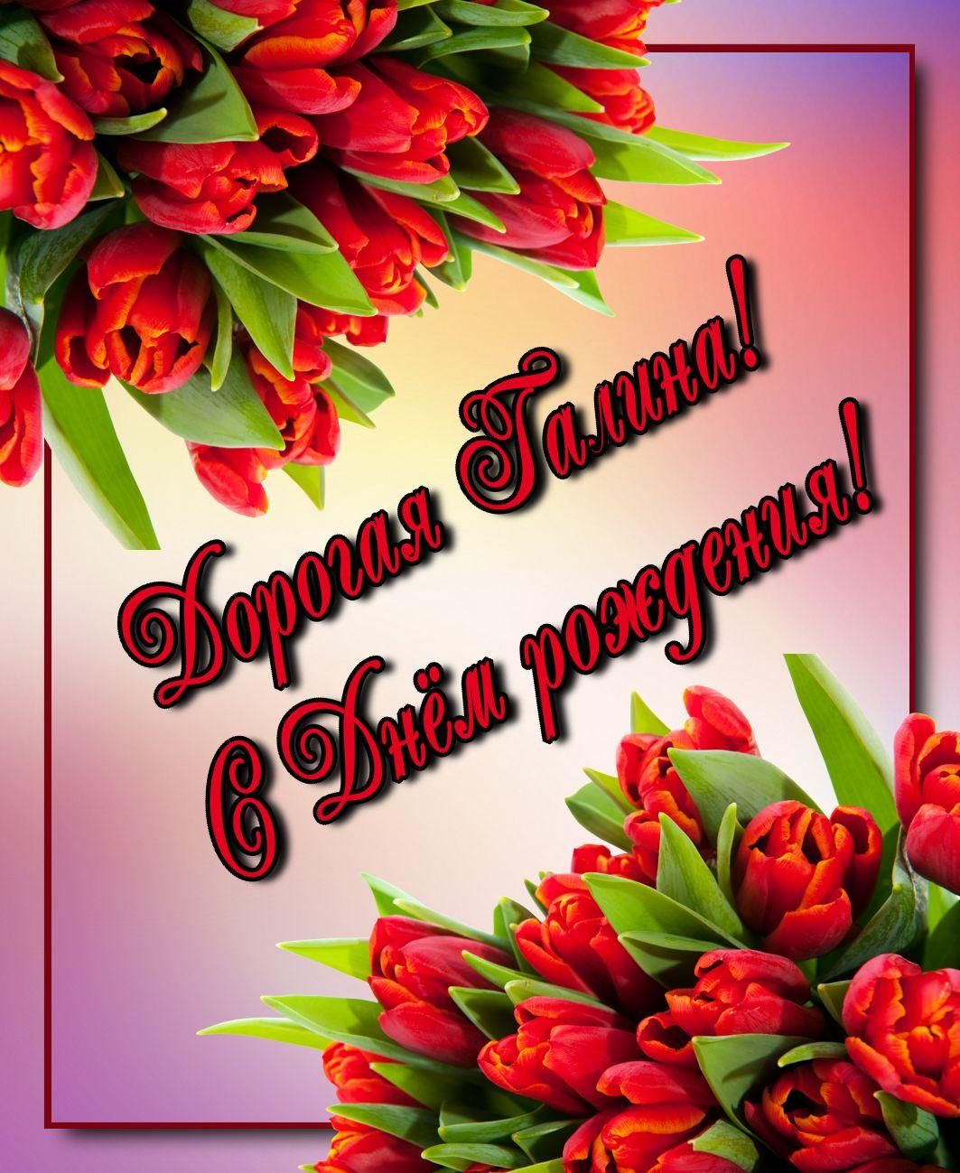 открытка - красные тюльпаны на День рождения Галине