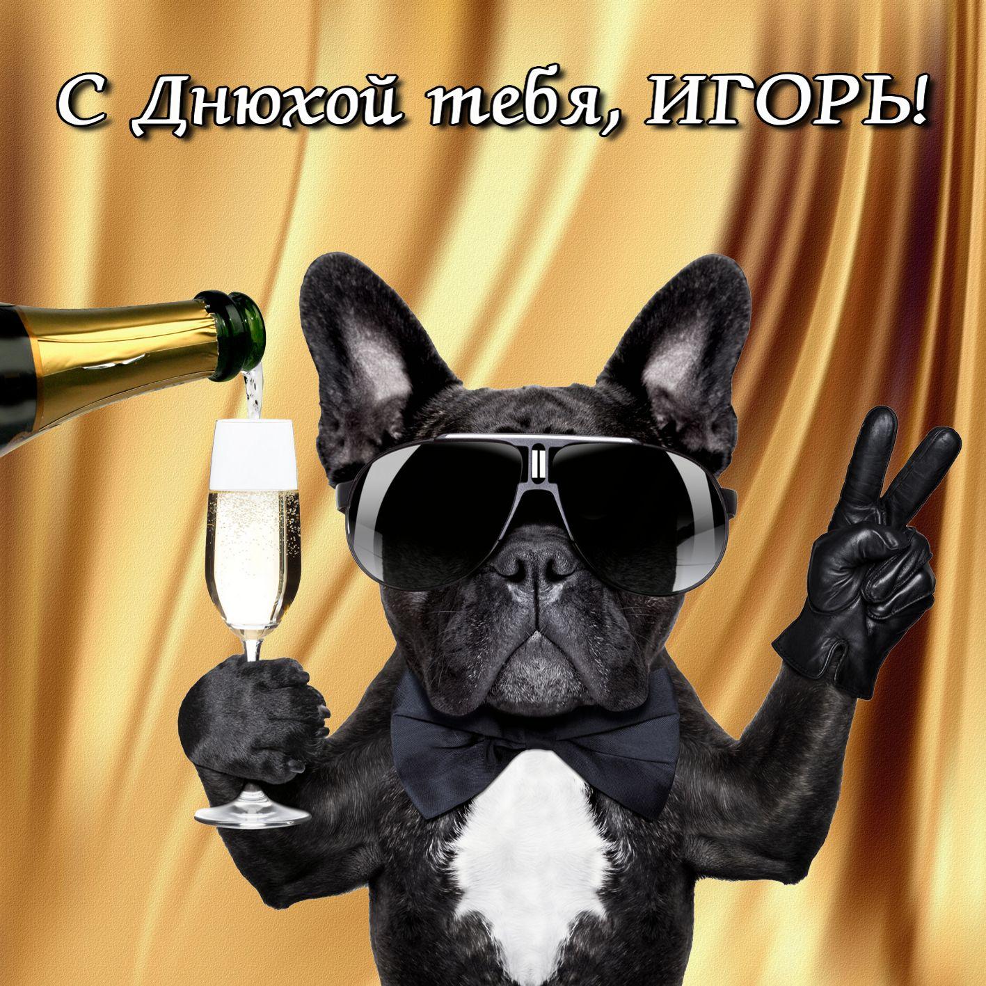 Пес в очках поздравляет Игоря