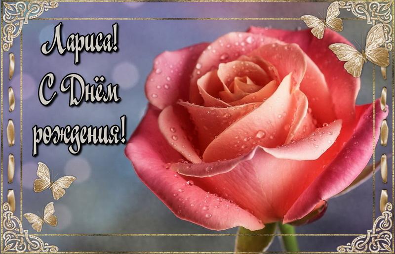 Красная роза Ларисе на День Рождения