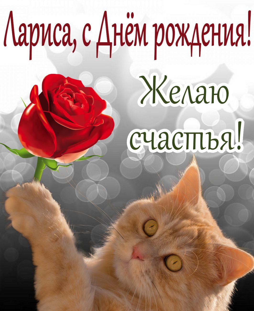 открытка на День рождения Ларисе - рыжий котик с розой желает счастья