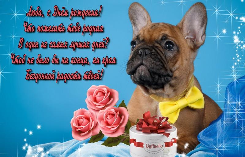 Собачка, цветы и конфеты для Любы