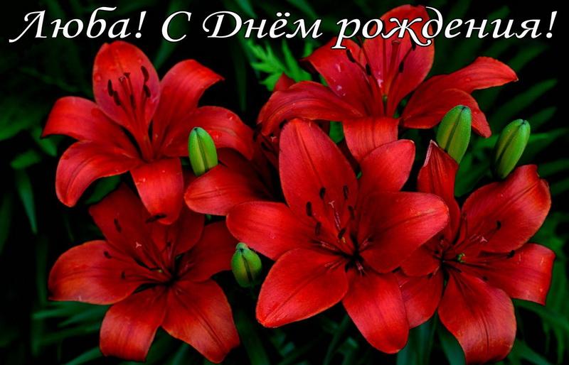Большие красные цветы Любе на День рождения