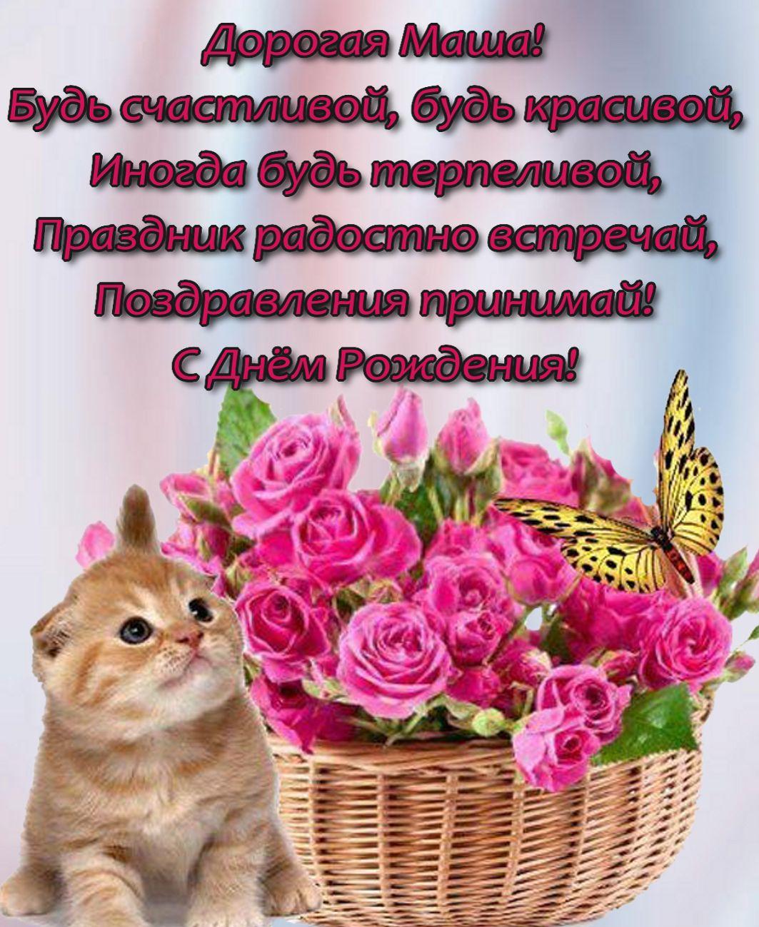 Красивый котик с корзинкой цветов и пожелание