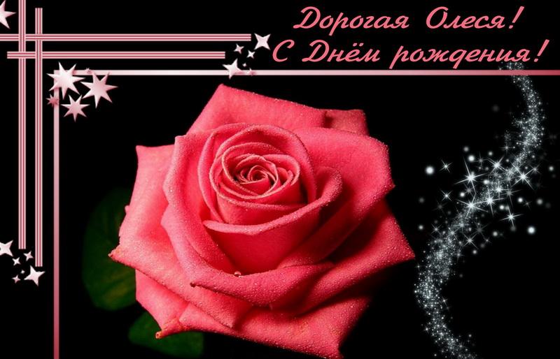 Большая красная роза для Олеси на темном фоне