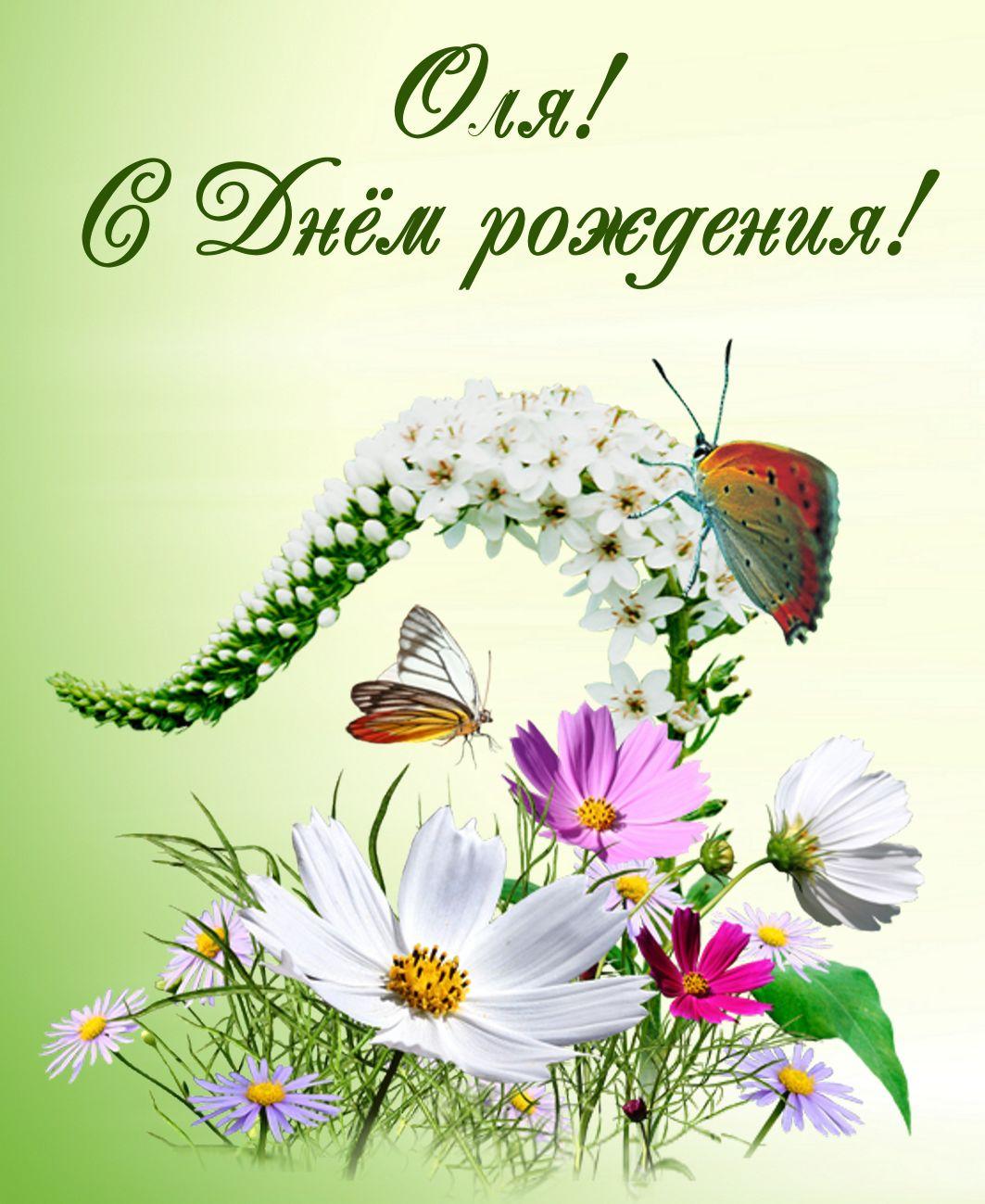 открытка - полевые цветы с бабочками на День Рождения Ольге