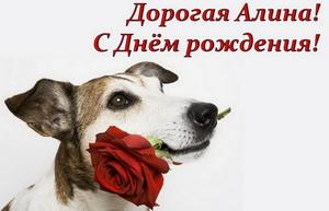 Собачка дарит розу Алине.