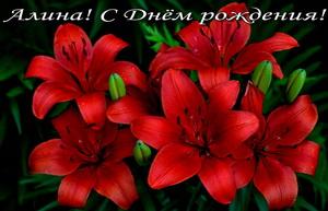 Открытка с Днём Рождения с красными цветами.
