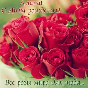 Красивые красные розы на День рождения