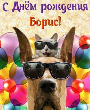 Забавная собачка в очках на фоне шариков