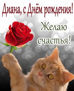 Красивый рыжий котик с красной розой