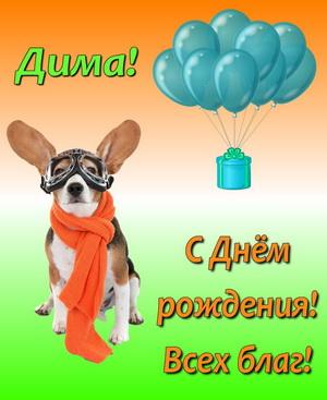 Собачка-летчик поздравляет Диму с Днем рождения