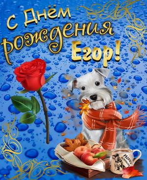 Собачка в шарфике поздравляет Егора с Днём рождения