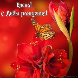 Картинка на День рождения Елене с цветами и бабочкой