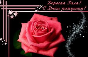 Большая красная роза на красивом темном фоне.